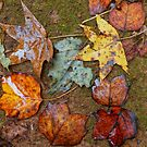 When November Comes 3 by Rodney Lee Williams