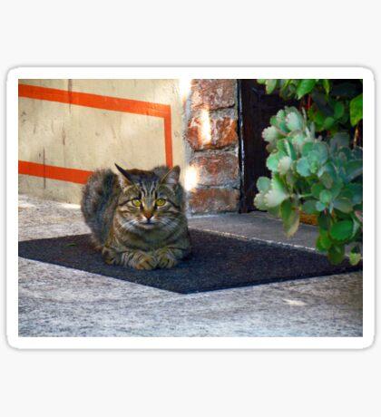 Cat at the door Sticker