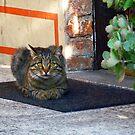 Cat at the door by Kallian
