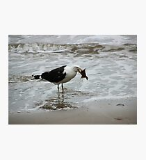 Gull With Flounder Photographic Print