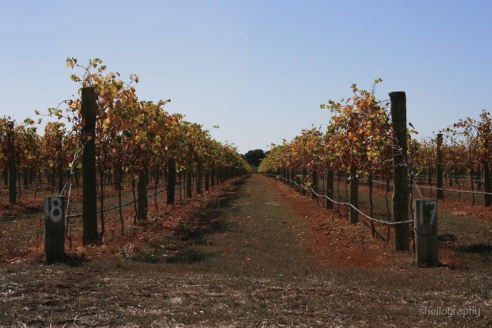 Vineyards in Autumn by shellography