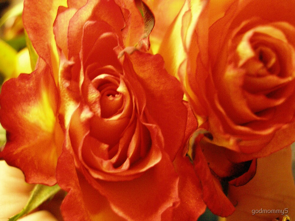 Rich Colored Roses by godmommy5