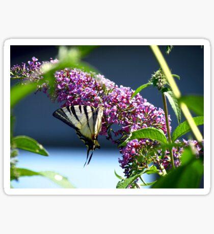 Butterfly 2 Sticker