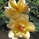 Rosa Crepescule by Susan Moss