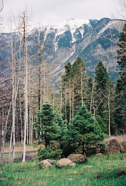 Rockies, Pines and Birch by tyedyechristine