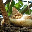 Sleepy Cat 2 by Kallian