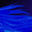 Wind Swept Blues by Rhonda Blais