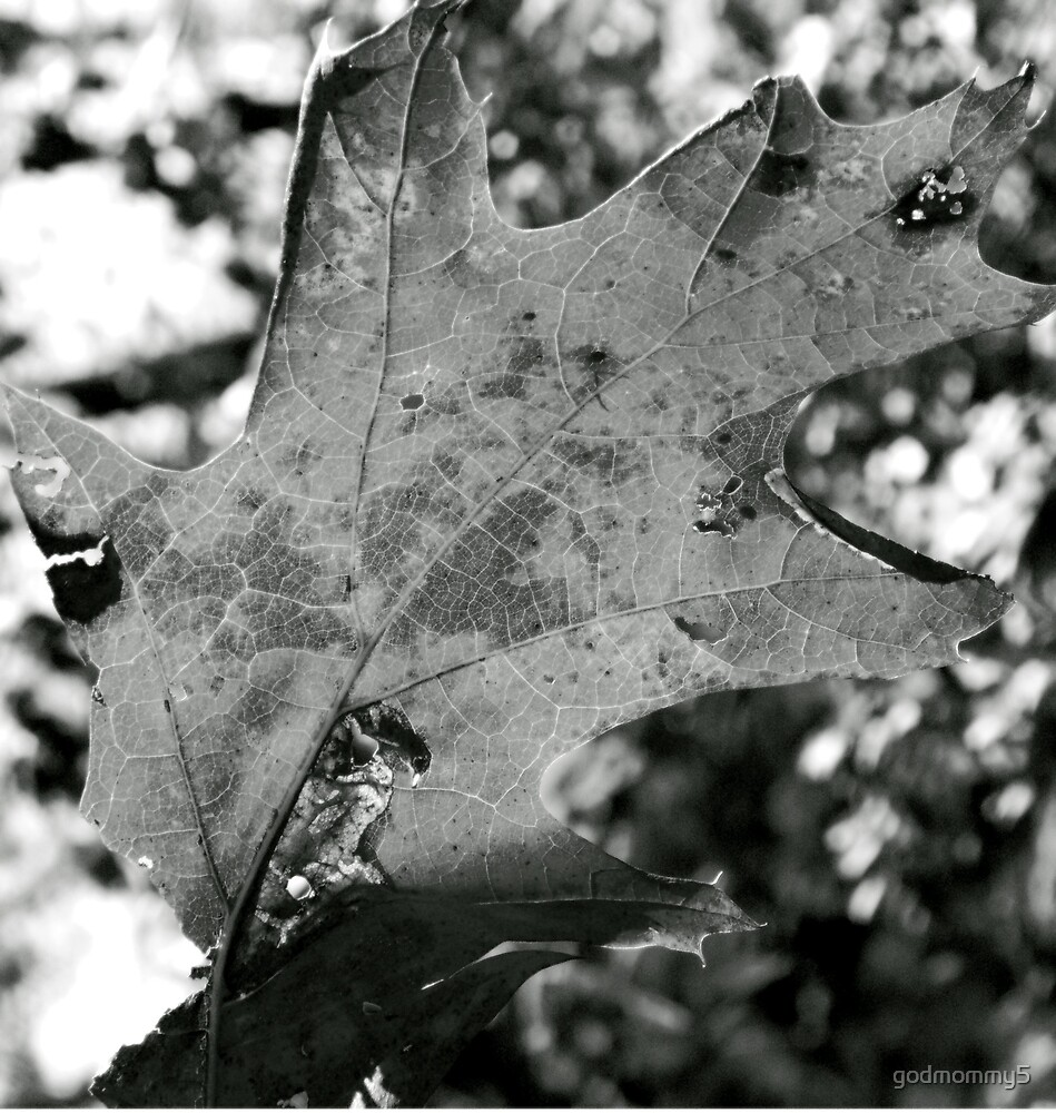 The Underside of Fall by godmommy5