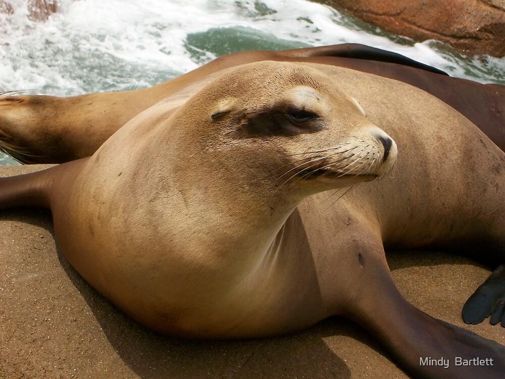 California Sea Lion by Mindy Bartlett