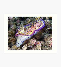 Nudibranch, Wakatobi, Indonesia Art Print
