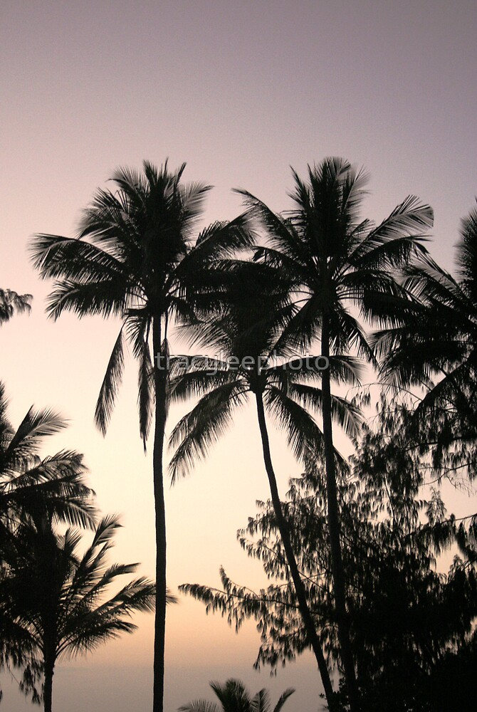 Palm Paradise by tracyleephoto