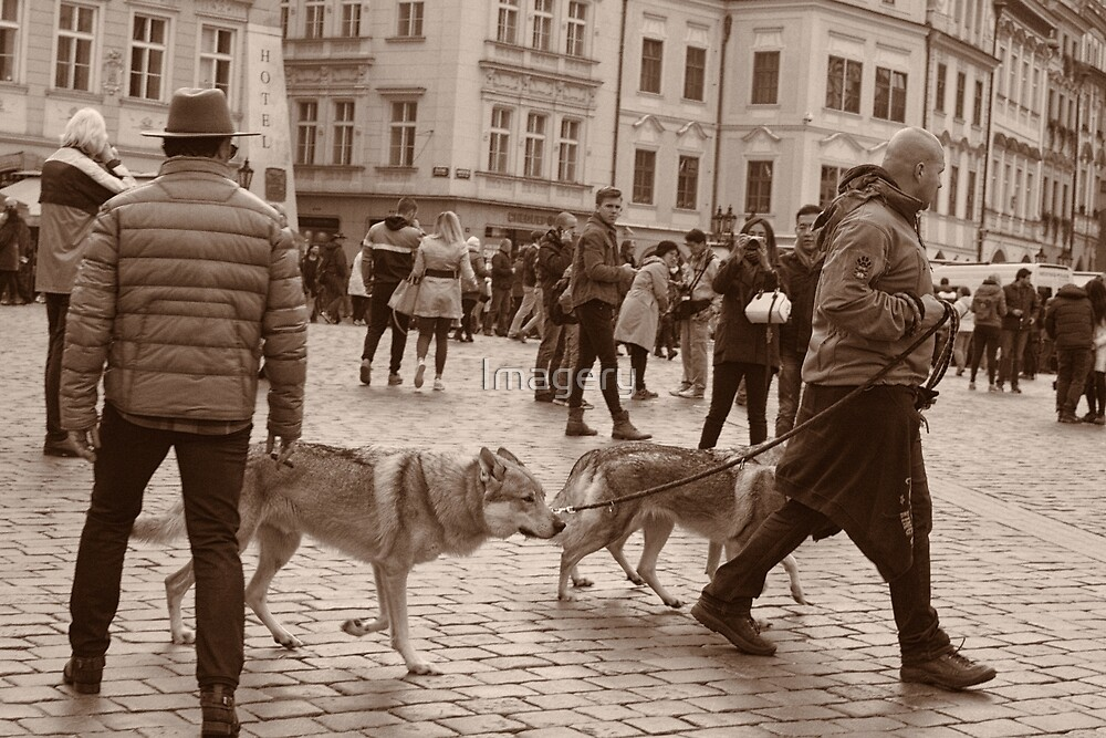 The Wolves of Prague by Imagery