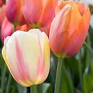 Flowers by Stephanie Johnson