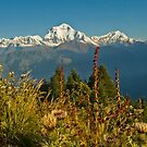 From thistle up...   Poon Hill, Nepal by Jennifer and Paul Cave