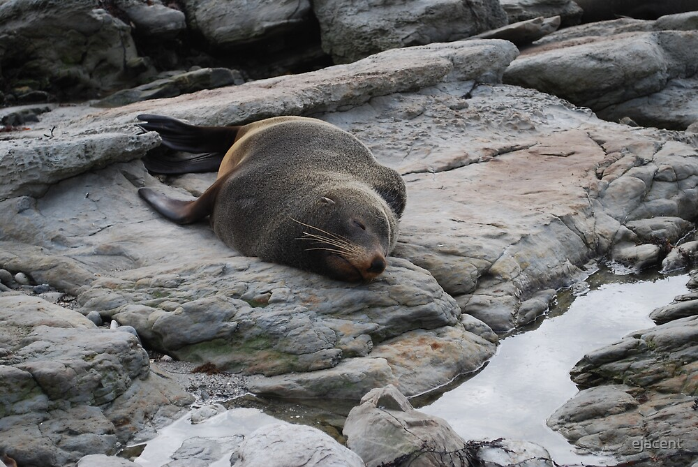 Sleepy Seal  by ejacent