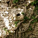 Provence Roots on wall by mindfulmimi