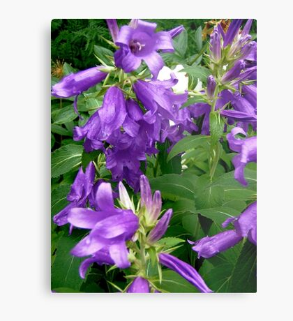 Purple flowers - All products Metal Print