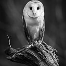 Barn Owl by jude walton