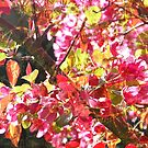 Siskiyou Warbler by Leigh Ann Gagnon