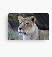 Ruler Of The Pack Canvas Print