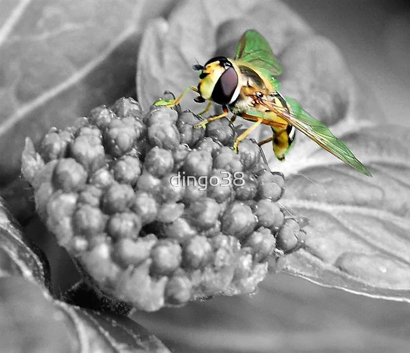 buzz by dingo38