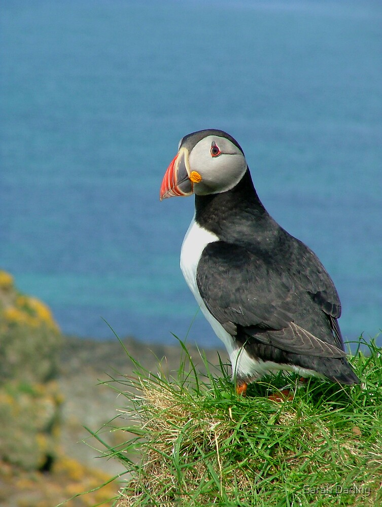 Puffin on the Edge by Sarah Darling