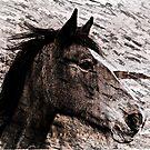 Horse by Forfarlass