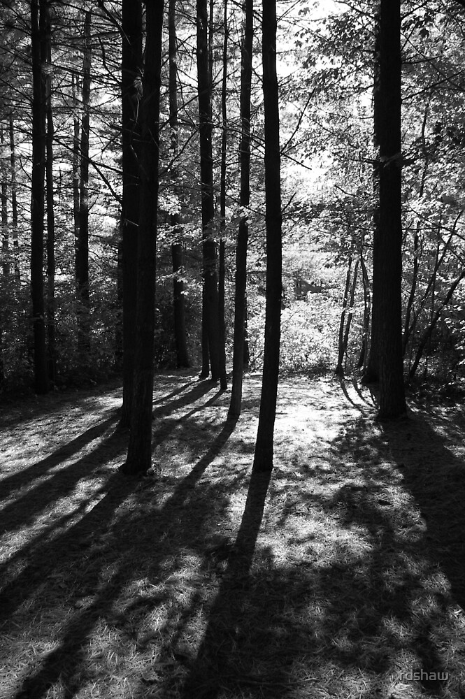 Sunlit Forest by rdshaw