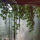 Out of the rain behind a Waterfall by Clare Colins