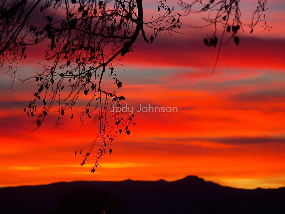 Branches in Orange by Jody Johnson