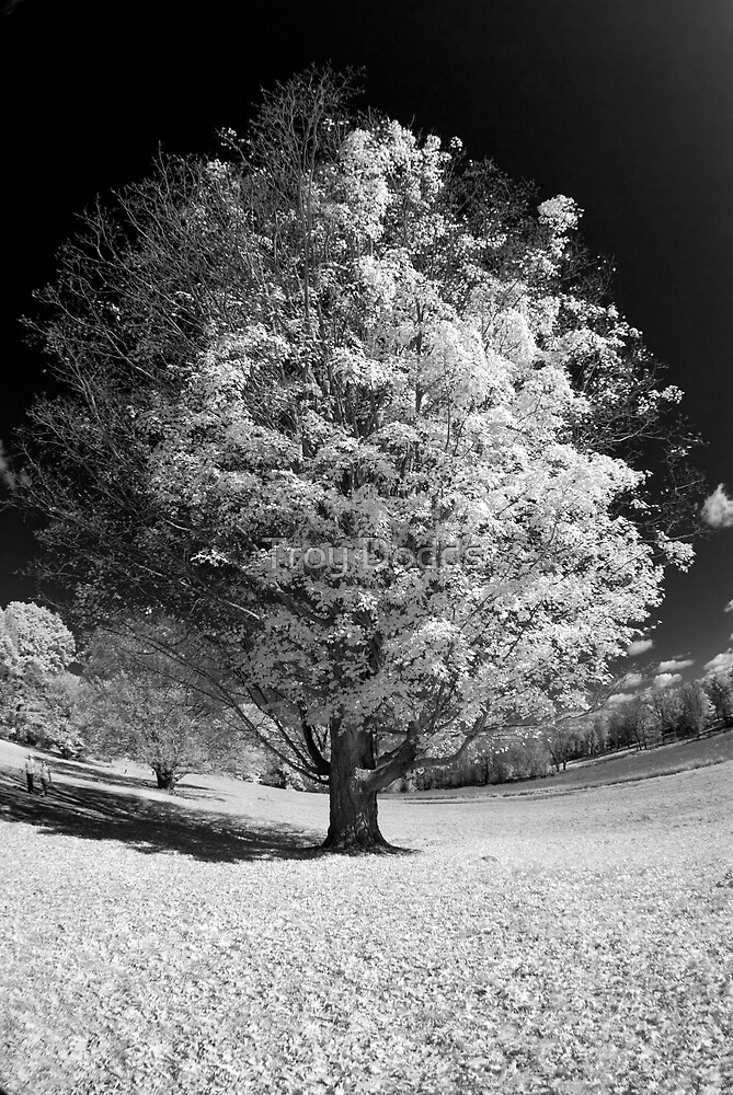Fisheye Tree by Troy Dodds