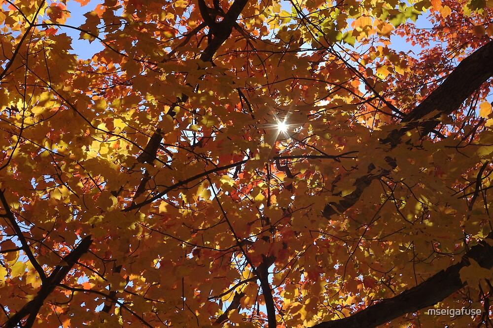 Sun peeking through foliage by mseigafuse
