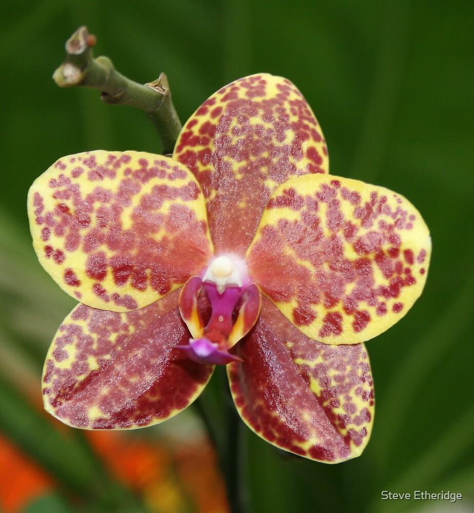 Nice flower by Steve Etheridge