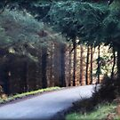 Mystic Forest Road by anitahiltz
