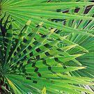 Fan Palm by joeyartist