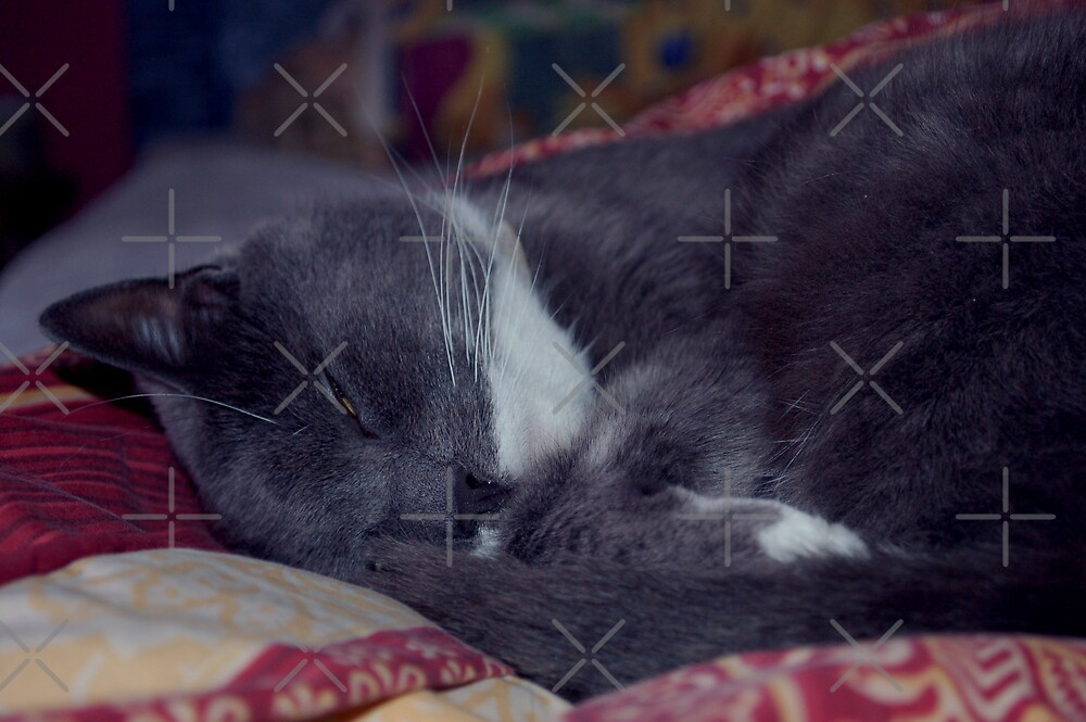 Duvet Cat by ApeArt