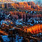 Fairy Land Lit UP by photosbyflood