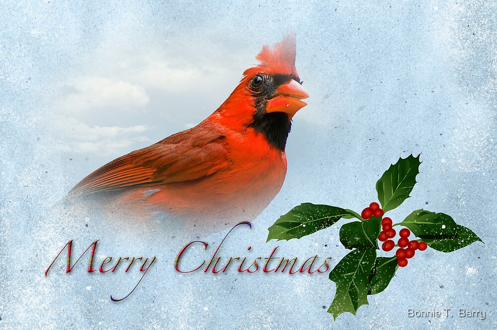 u0026quot merry christmas cardinal u0026quot  by bonnie t  barry