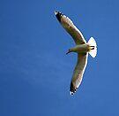 Flying high by Anne-Marie Bokslag