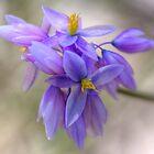 Vanilla lily by Michael Matthews