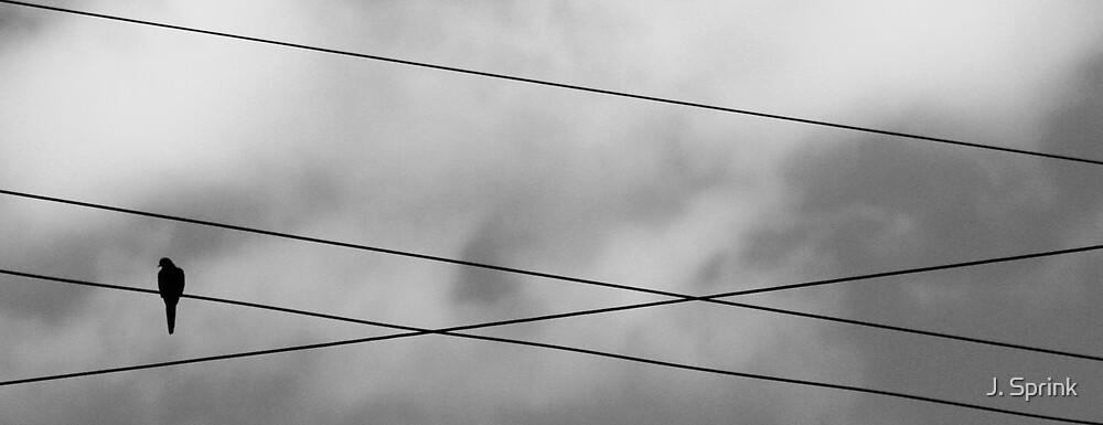 Bird on a Wire by J. Sprink