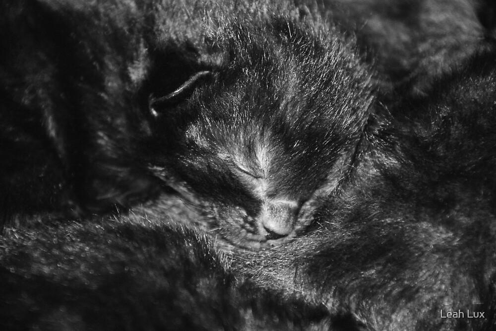 Sleepy Kitten by Leah Lux
