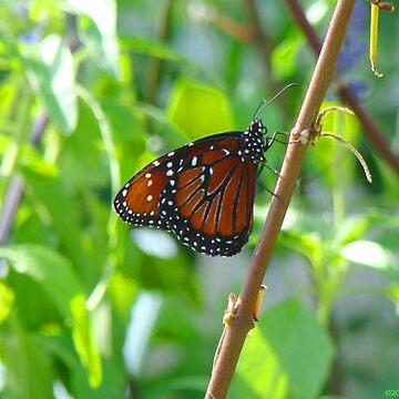 Butterfly II by OceanicDreams