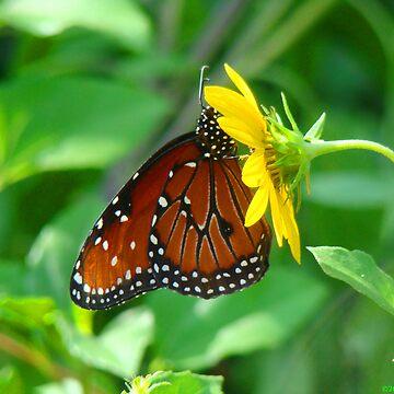 Butterfly III by OceanicDreams