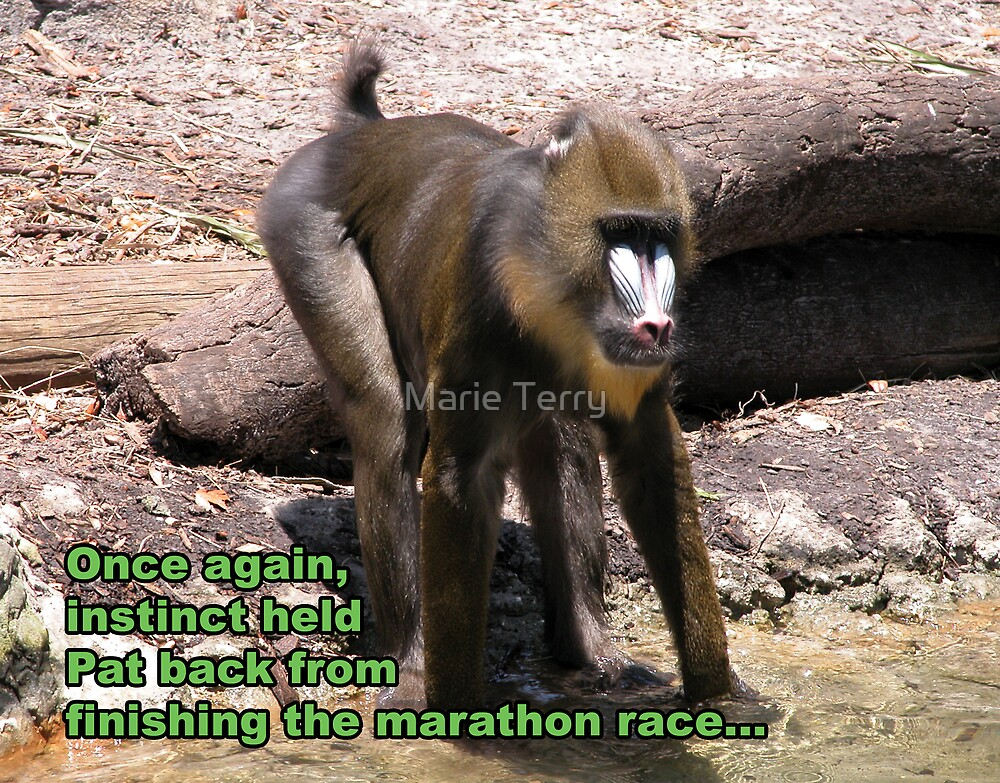 Mandrill in a Marathon by Marie Terry