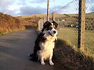 Out and about with Laddie. by Michael Haslam