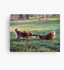 My toy NO my toy! Canvas Print