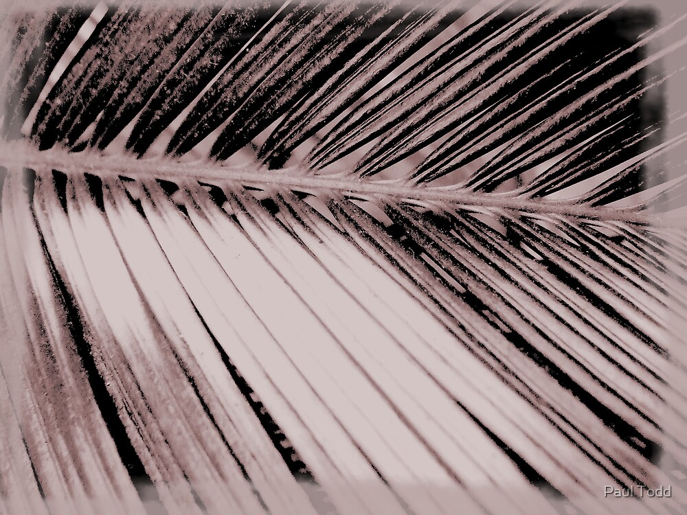 Frond by Paul Todd