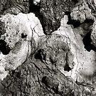 """""""Butterfly Oak"""" by Bradley Shawn  Rabon"""