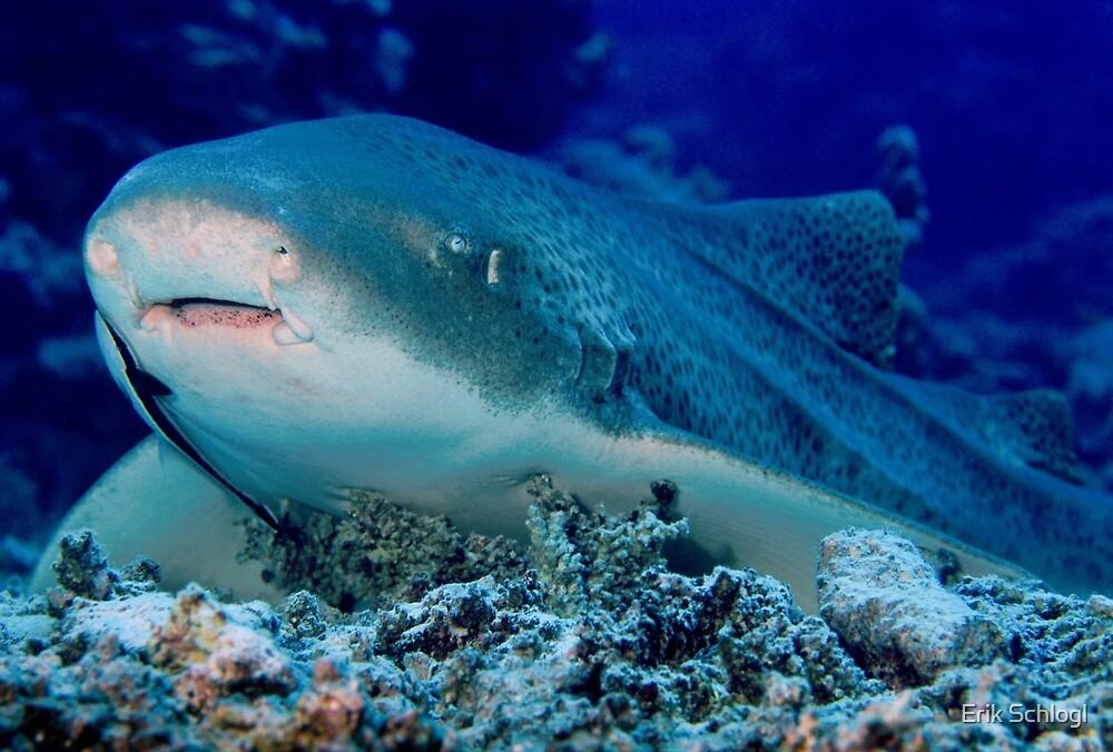 Leopard Shark, Great Barrier Reef by Erik Schlogl